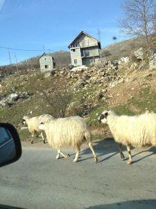 Oh Bosnia